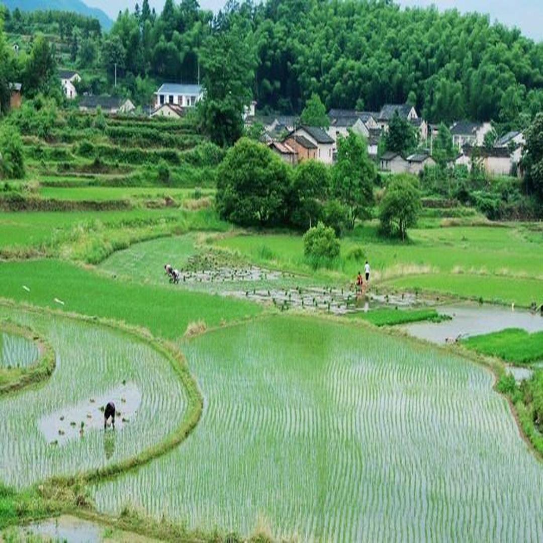 黄山区农村风景